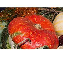 pumpkin in the garden Photographic Print