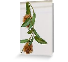 curly chestnut Greeting Card