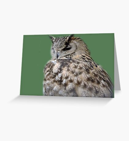 Soft Back Feathers Greeting Card
