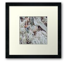Gorgeous Weeds Numero Uno Framed Print