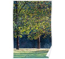 tree in the park Poster