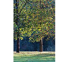 tree in the park Photographic Print