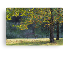 bench and tree in the park Canvas Print