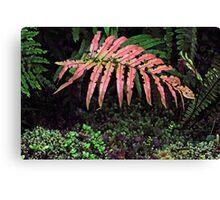 Red Fern New Zealand Canvas Print