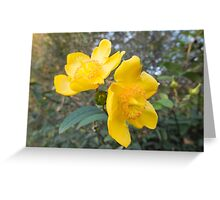 buttercup in the garden Greeting Card
