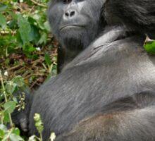 silverback mountain gorilla, Bwindi, Uganda Sticker