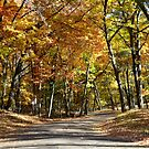 Ludington State Park in the Fall by Debbie  Maglothin