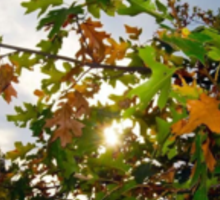 Shining Autumn Sticker
