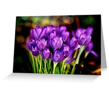 The Crocus Family Greeting Card