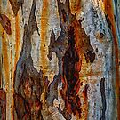 The Tree Bark Collection # 6 by Philip Johnson