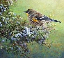 autumn juniper berries and yellow rumped warbler by R Christopher  Vest