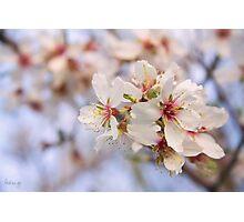 Almond flowers (II) Photographic Print