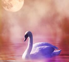 Swan by franceslewis