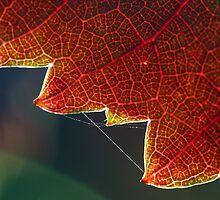 Autumn Grape Leaf Macro by Danielle Shields