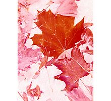 Pink Autumn Leaves Photographic Print