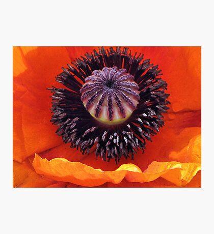 A Memorable Flower Photographic Print