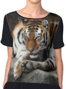 tiger cats Chiffon Top