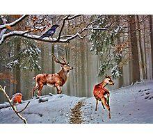 British Woodland Animals Photographic Print