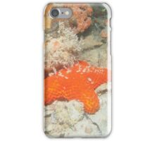 starfish in orange iPhone Case/Skin