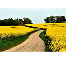 Driving through the rapeseed fields  Photographic Print