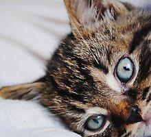 Peekaboo Kitten by InterestingImag