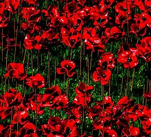 Poppy fields of remembrance for WW1 at Tower of London - square photo by Luke Farmer
