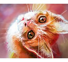 Red Kitty  Photographic Print