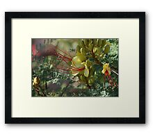 flower yellow/ red. Framed Print