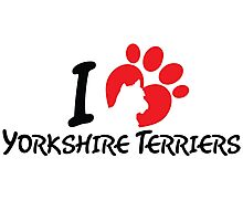 I Love Yorkshire Terriers Photographic Print