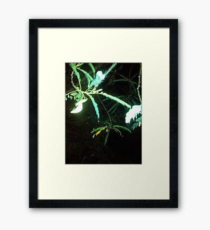 Vegetable turi Framed Print