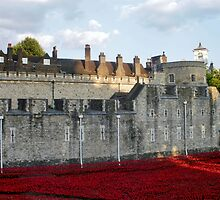 Poppies at The Tower by InterestingImag