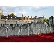 Poppies at The Tower Photographic Print