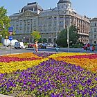 Gresham Palace beyond the Petunias by Graeme  Hyde