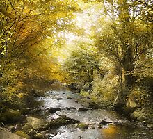 Golden Stream by Danuta Antas