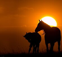 Twilight Mustangs by Kent Keller
