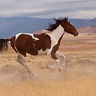 Racing the Wind by Kent Keller