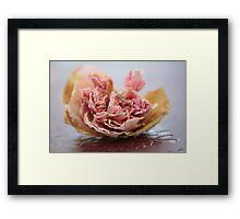 Faded Rose IV Framed Print