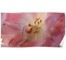 A peek at the inside of a tulips..... Poster