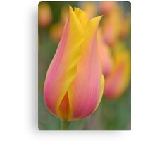 Pink and Yellow Tulip Canvas Print