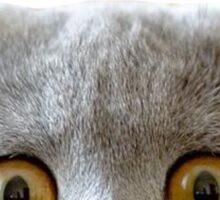 Peeking Cat Sticker