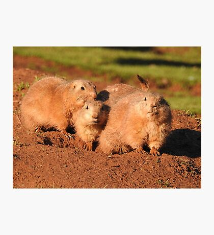 Prairie Dog family Photographic Print