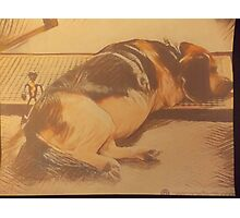 Toys For Beagle Dogs. Photographic Print