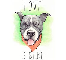 LOVE IS BLIND - Stevie the wonder dog Photographic Print