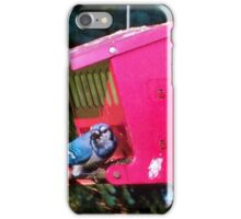 Blue Jay iPhone Case/Skin