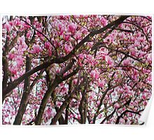 tulip trees Poster