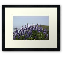 Lupine Flowers Photography Print Framed Print