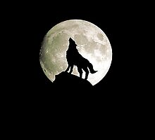 Howl at the moon, coyote, howling wolf, Native American by NerdGirlTees