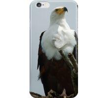 AFRICAN FISH EAGLE - Haliaeetus vocifer -Visarend iPhone Case/Skin