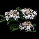 Enchanted Bouquet by Victoria Jostes
