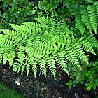 Fabulous Ferns by BlueMoonRose